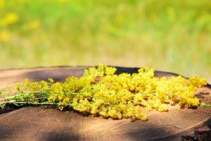 delmarte-high-quality-tea-yellow-galium.jpg